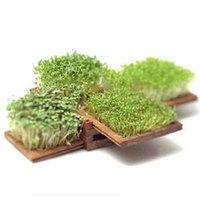 mini_garden.jpg